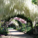 Les merveilles d'Apremont-sur-Allier