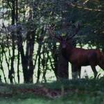 Week-end couleur d'Automne – Brame du cerf à la lanterne